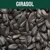 girasol-textoM