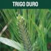 trigoduro-textoM